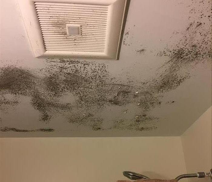 Mold Remediation Understand Mold